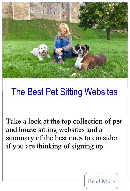 Best Pet Sitting Websites