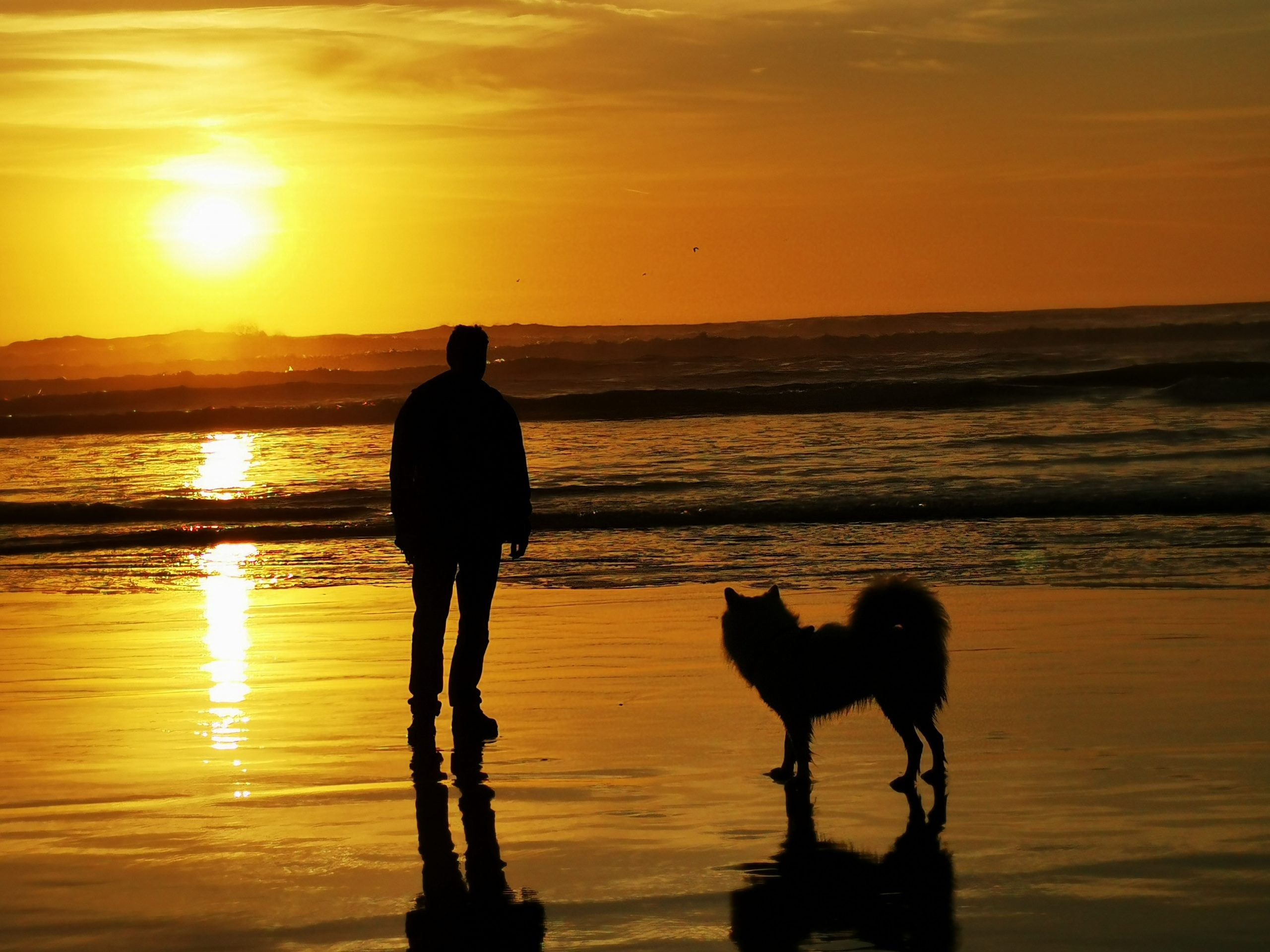 Top Tips For Pet Sitters