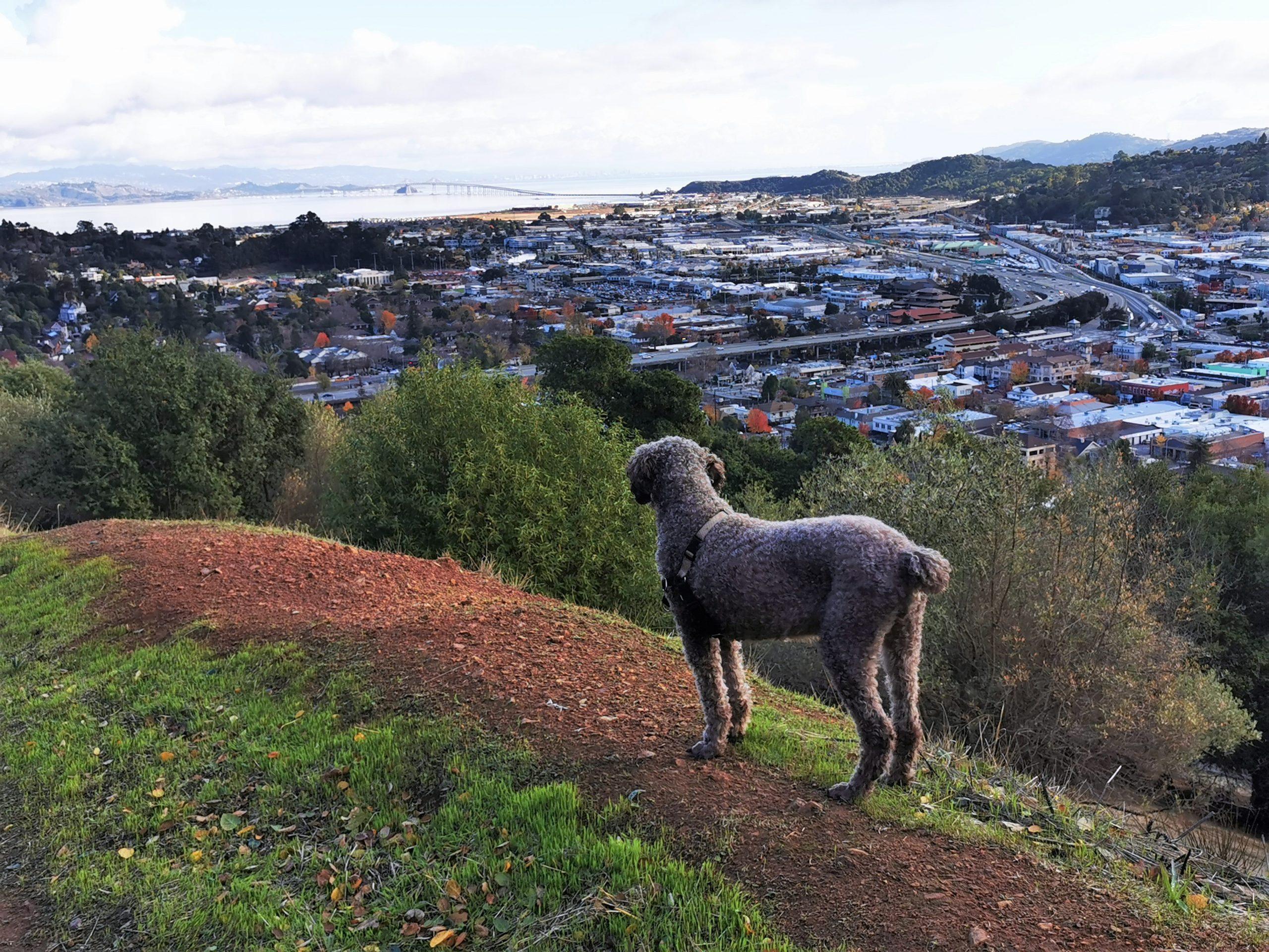 San Rafael Pet Sitting