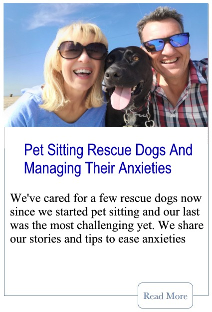 Pet Sitting Rescue Dogs