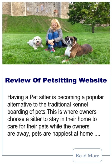 Petsitting Websites A Comparison